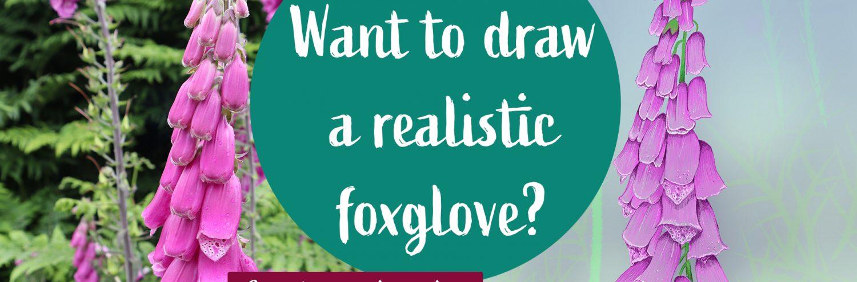 Draw a realistic foxglove